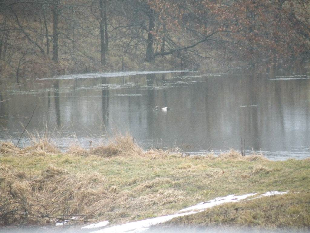 ducks015.jpg